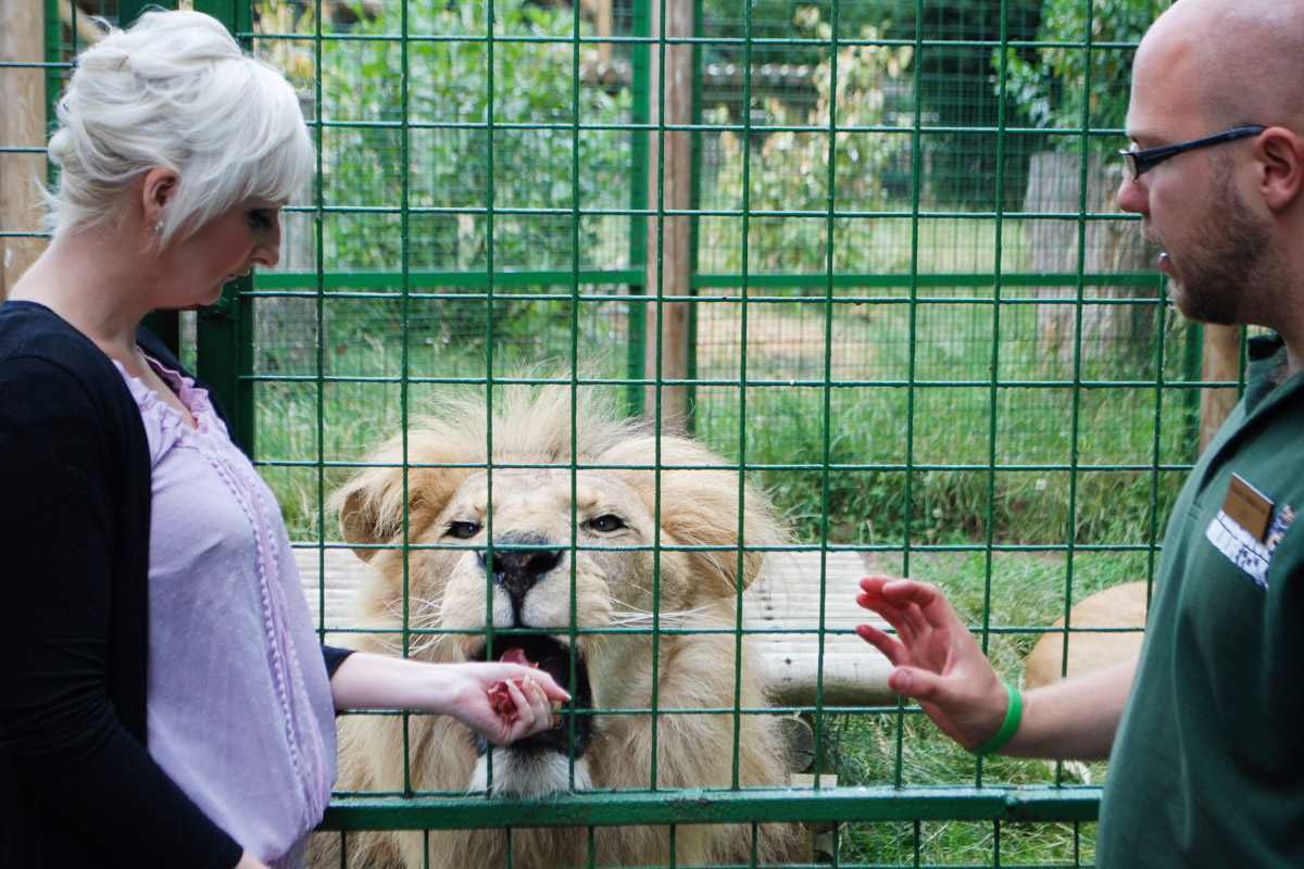 Feed the Big Cats for One - Weekends