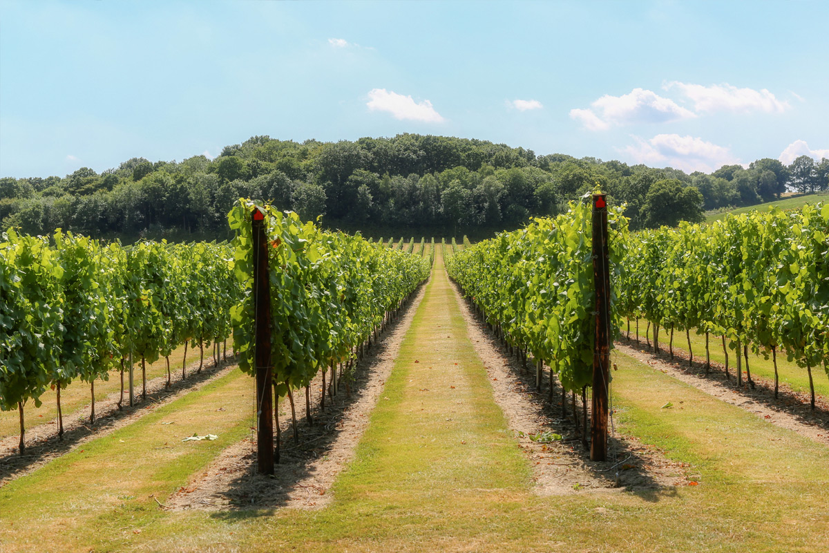 Full Estate Tour and Tasting for Two at Hush Heath Winery