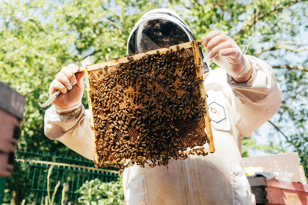 London Beekeeping and Craft Beer Tasting for Two
