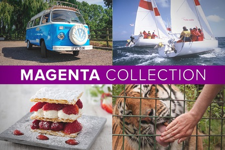 The Magenta Collection