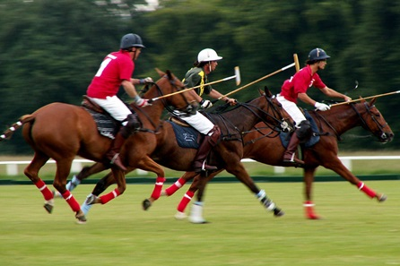Discover Polo at Westcroft Park Polo Club