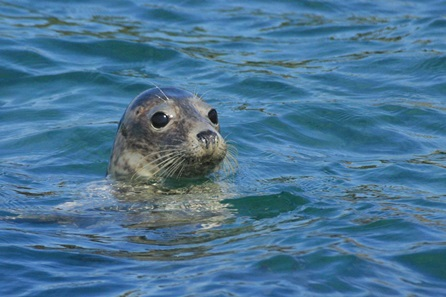 1 Hour Seal Cave Experience for Two Adults and Two Children