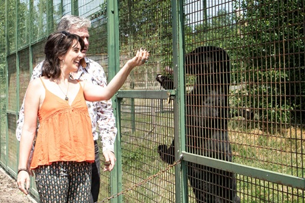 Big Cat Encounter - Weekdays