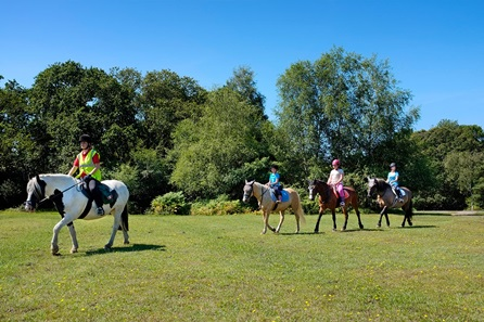 Introduction to Horse Riding for Two in the New Forest