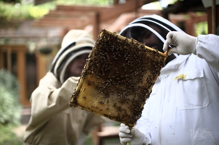Sunday Urban Beekeeping and Honey Craft Beer Tasting for Two