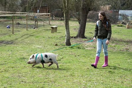 Miniature Farm Animal Experience with Sweet Treats and Tea for Two at Huckleberry Woods