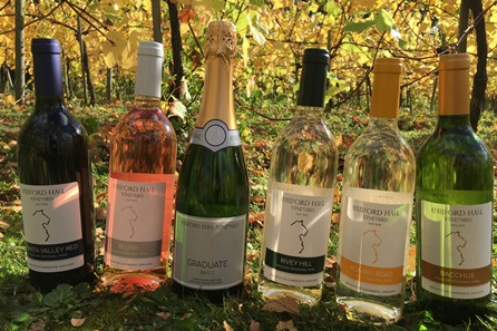 Tour and Tasting with Afternoon Tea for Two at Chilford Hall Vineyard