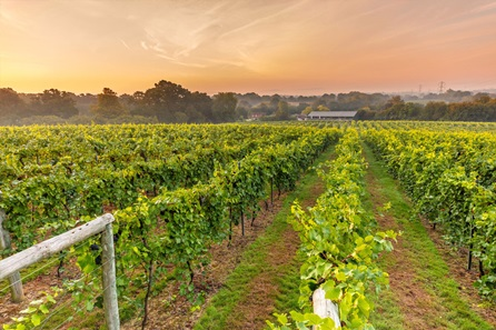 Twilight Vineyard Tour, Wine Tasting and Five Course Tasting Dinner for Two at Bolney Wine Estate