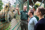 Feed the Big Cats for Two - Weekdays