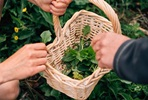 Wild Foraging Walk for Up to Six People with Totally Wild