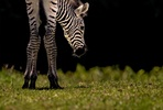 Full Day Animal Photography Course at Cotswold Wildlife Park