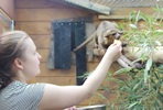 Meet the Kinkajous at Hemsley Conservation Centre