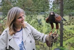One Hour Private Falconry Encounter for Two at Millets Falconry