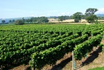 Vineyard Tour and Tasting with Sparkling Afternoon Tea for Two at Kerry Vale Vineyard