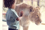 Visit to ZSL London Zoo and Dining at Rainforest Cafe for Two Adults and One Child