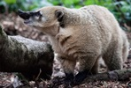 Walk on the Wild Side and Meet the Animals for Two at Dartmoor Zoo